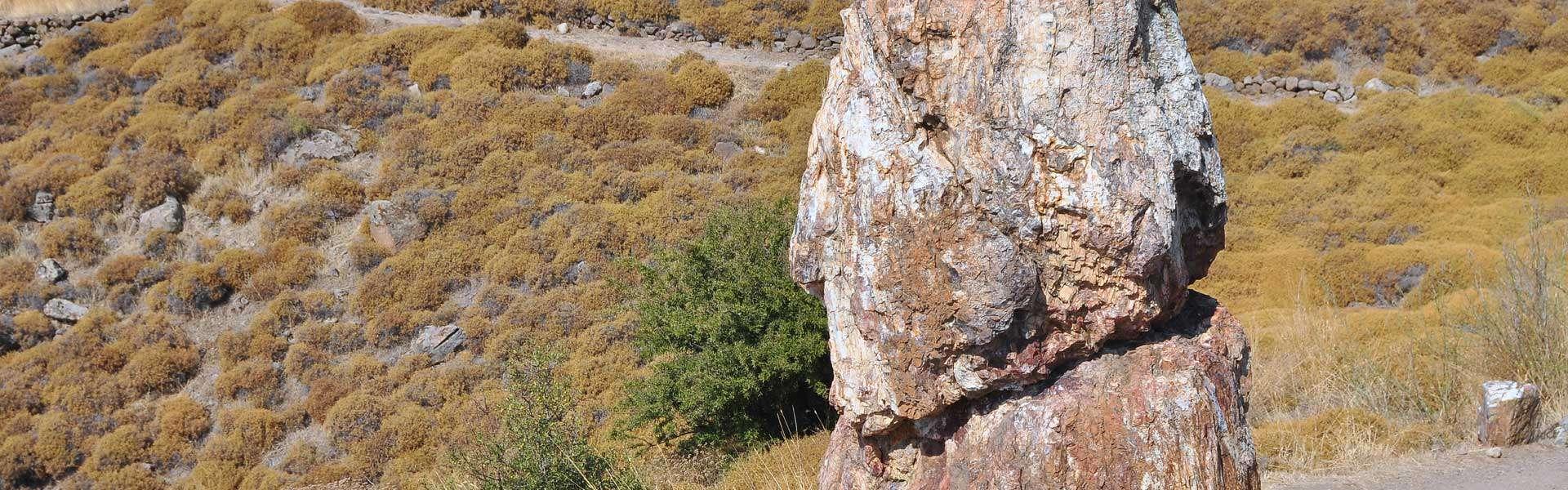Natur außergwöhnlich erleben: Der Versteinerte Wald auf Lesbos
