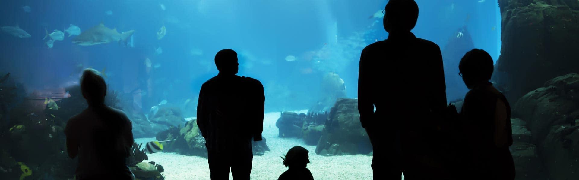 Tauchen Sie in die Unterwasserwelt des Aquarium Lissabon