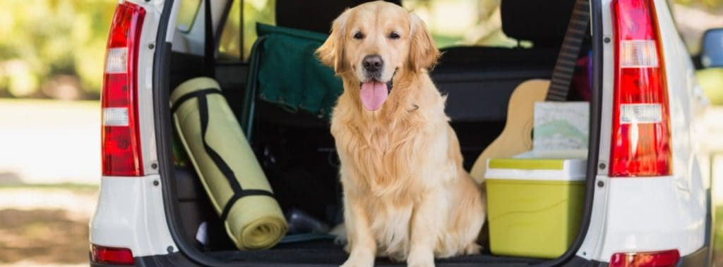 Hundeurlaub - Hund im Kofferraum, auf dem Weg in den Urlaub
