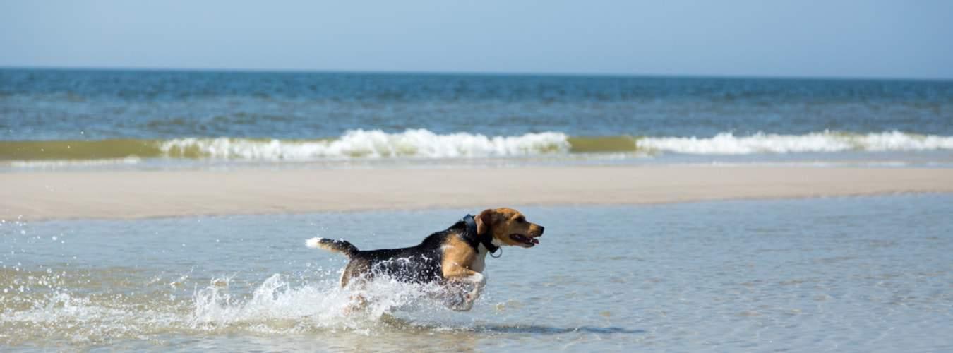Beim Hundeulraub auf Sylt können sich die Hunde an den Hundestränden ordentlich austoben
